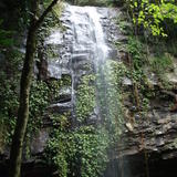 dorrigo waterfall