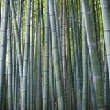 vertical bamboo background