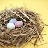 Mini Egg Nest