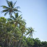 tropical beach trees