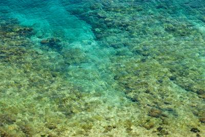Shallow clear water with coral