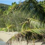 Coconut palm overlooking a secluded beach