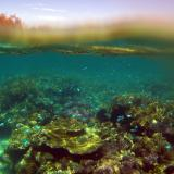 Snorkelers view of a coral reef