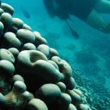 Scuba diver and coral reef formation