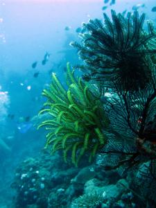 Feather star coral and fishes