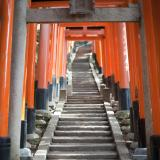 Torii gates at the Fushimi Inari-taisha